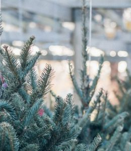 Real Christmas Tree Buying Guide – everything you need to know!