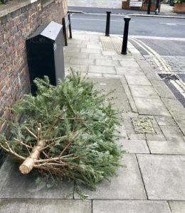 discarded_tree