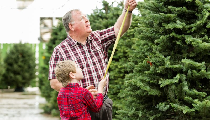 Decorating Your Christmas Tree With Children