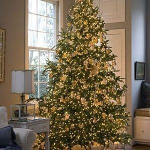 pure gold theme-jethouse.blogspot.com