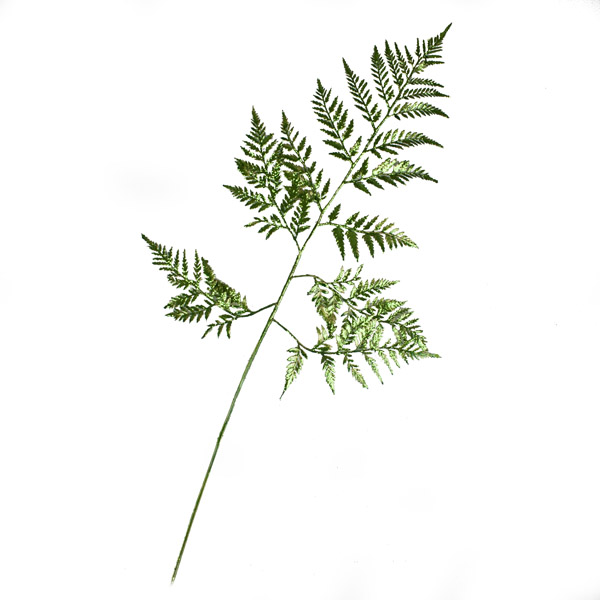 Gisela Graham Metallic Green Fern Spray - 79cm