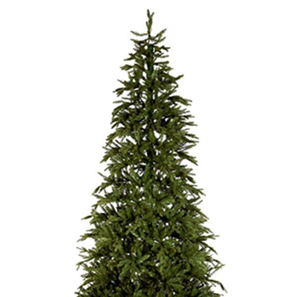 Canyon Pine Display Tree - 3m (10ft)