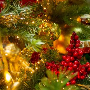Christmas Floristry and Picks