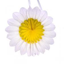 Yellow/White Paper Rosette Flower - 50cm