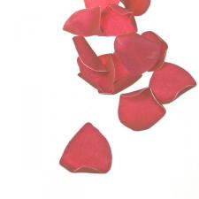 Bag Of Decorative Light Pink Rose Petals